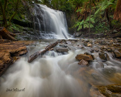 Lilydale Falls in full flow!