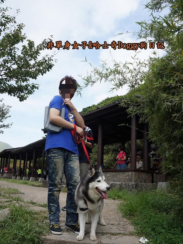 哈士奇Doggy2013陽明山二子坪14