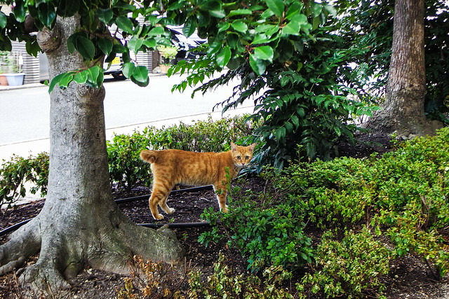 Today's Cat@2016-08-09