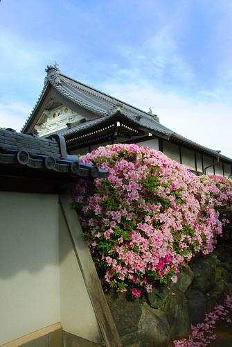 Konan Fuji Matsuri 084r