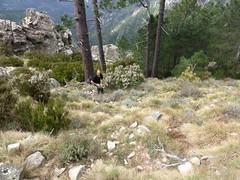 Dans la fin du couloir herbeux de montée au sommet Est de Punta Batarchjone