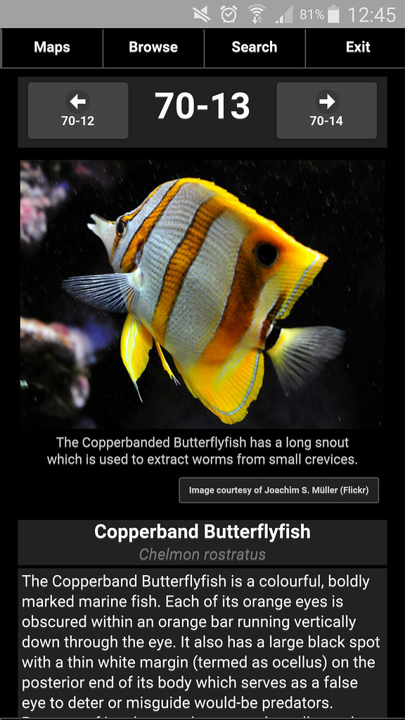 Information screen of Copperband Butterfly Fish