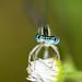Blue eyes by gabrielegalloni