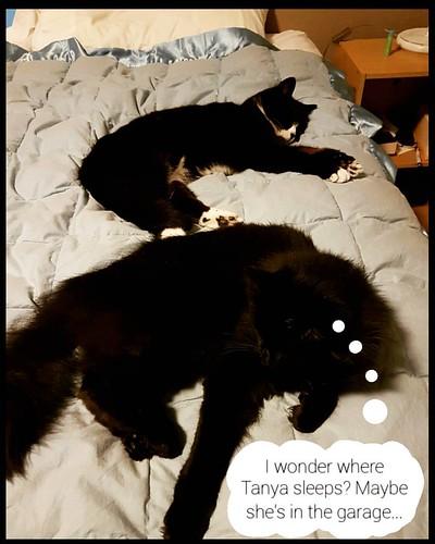 #pet #cats #catsofinstagram
