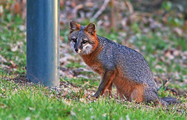 Fox 20d_3349