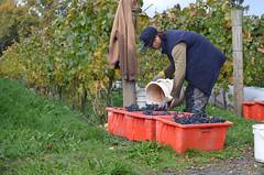 outdoor structure(0.0), beekeeper(0.0), agriculture(1.0), farm(1.0), garden(1.0), yard(1.0), gardener(1.0),