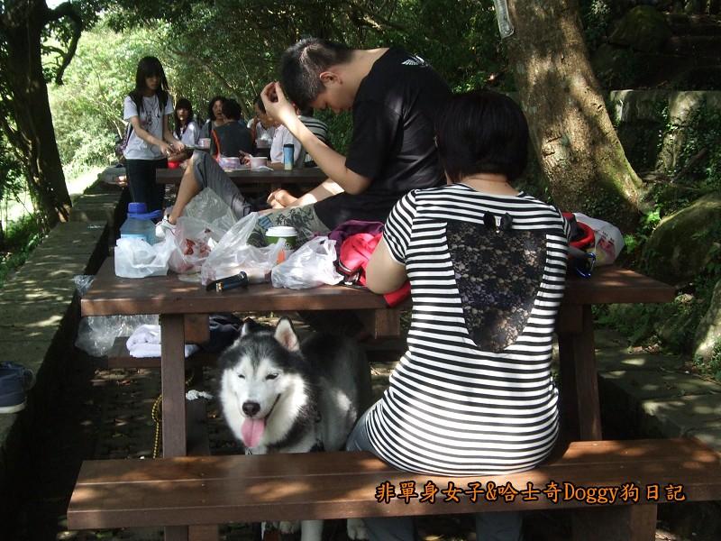 哈士奇Doggy2012陽明山二子坪02