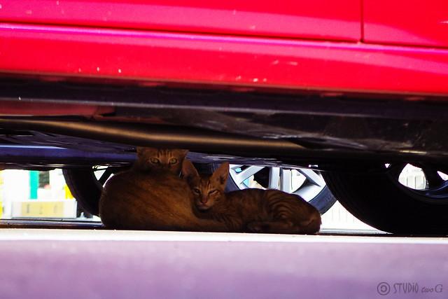 Today's Cat@2016-08-11