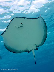 Stingray joins us for a snorkel