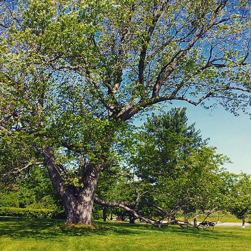 Mighty tree at Knox Farm #KnoxFarm #EastAurora #wny