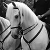 #caballo #policia #1demayo #cordoba #batalladeflores