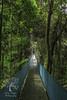 Costa Rica Hanging Bridge
