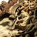 Angkor Wat bailarina