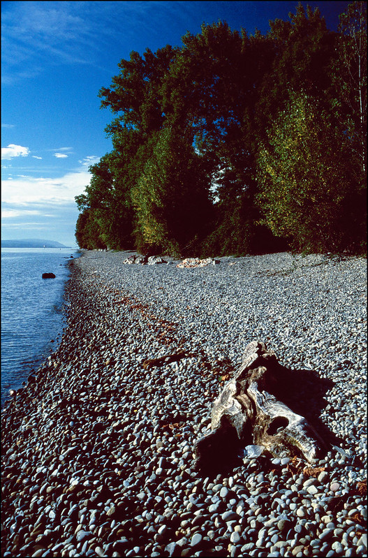 Am Ufer des Bodensees 1 (Hochformat)
