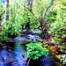 Forest Glade - Alaska by JLS Photography - Alaska