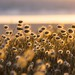 Trouvez votre place sous le soleil  (Find your place in the sun) by l'imagerie poétique