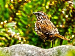 Birdie HDR