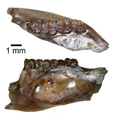 seafood(0.0), mineral(0.0), horn(0.0), iron(0.0), conch(0.0), jaw(0.0), stone tool(0.0), fossil(1.0),