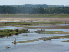 wetland, swamp, polder, plain, natural environment, mudflat, shore, salt marsh, rural area,
