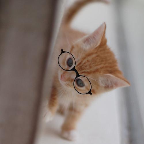 Darling_glasses_6