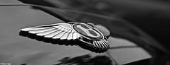Bentley Continental GT Speed - Blaricum, The Netherlands