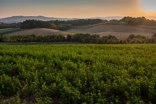 Perelli Sunset