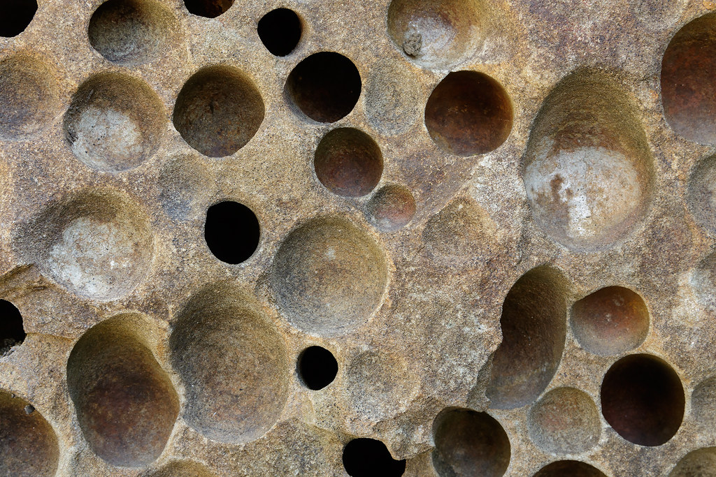 Holes made long ago by piddocks digging into sandstone