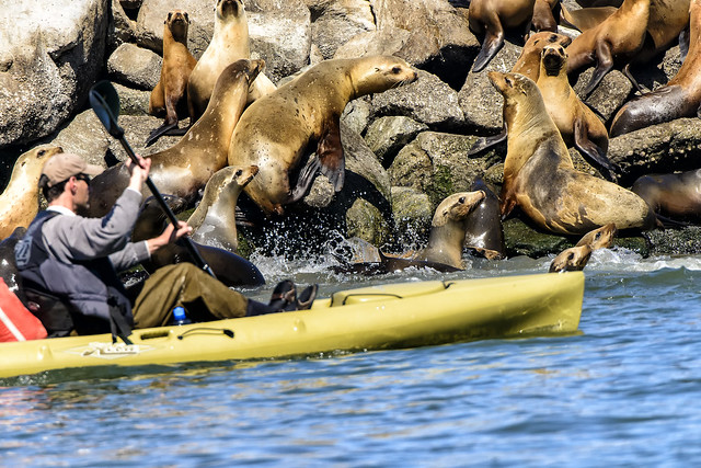 KAYAKING AND PHOTOGRAPHY IN MOSS LANDING: MONTEREY BAY