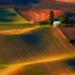 Golden Grain by Gary Randall