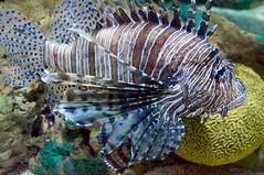 Ripley's Aquarium 78