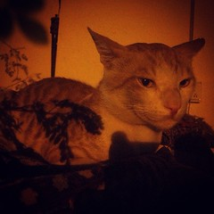 #Handsome #Tomcat sitting on the #edge with #yellow #lighting and surrounded with #trees casting #shadows. #Cute Cat #instapic