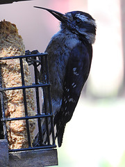 Long Beak