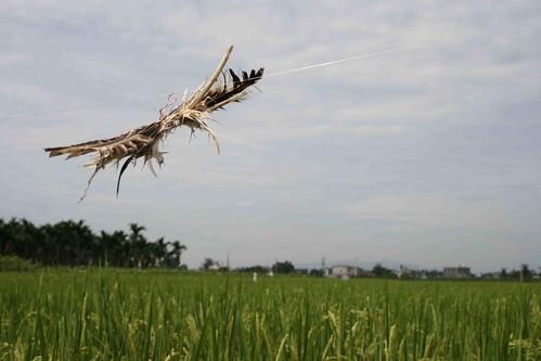 秀德伯雞毛當令箭的魚目混珠花式驅鳥法。攝影:李慧宜