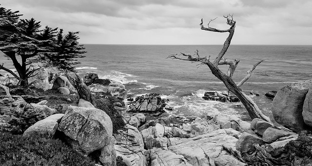 Beach Vista, 17 mile drive (B&W)