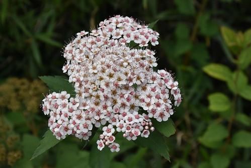 雪山雪東線-不知名的花