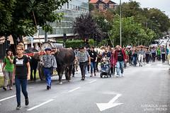 Gurdi Bidea Burgos Albaola-2950