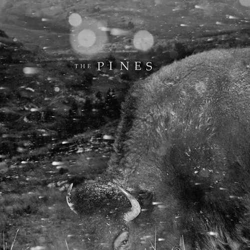 The Pines - Pasture Folk Songs