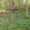 Woodland flowers #woodland #park #walksinthepark #blue #tree #pretty #uk #countryside