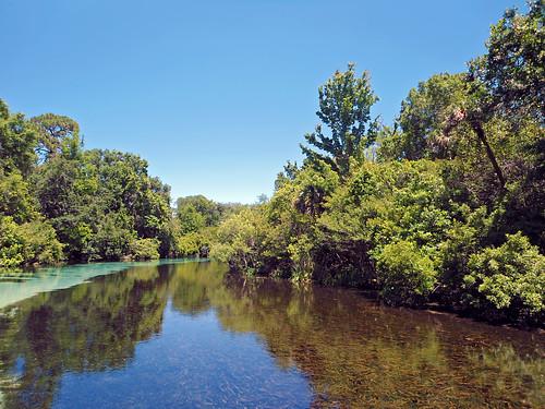 river stream water trees clearsky weekiwachee florida