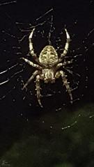 The Itsy Bitsy Spider_0001