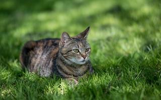 kitty (32)