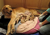 Nursing New Born Puppies