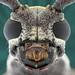 Longhorn beetle by melnikor