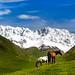 Massif Shkhara, Ushguli, Svanétie by Alexandre Carpentier