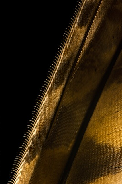 - Secrets of a Night Raptor -