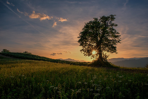 flowers light sunset tree nature clouds canon landscape spring italia sunrays 6d montefeltro ef24mmf28