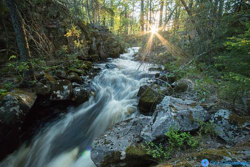 trees sunset sun sol nature water norway creek forest bush stream skog solnedgang kongsberg bekk