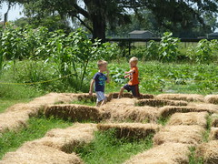 Sweetfields Farm