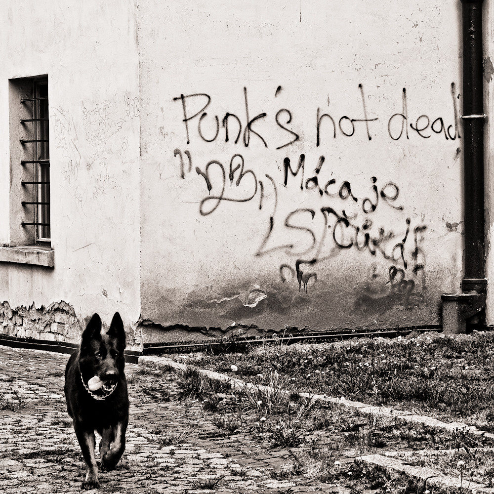 punks not dead // litomerice