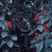 Garden of secrets by Mike Alegado